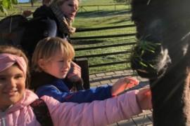Wandertag 2.b zur Wollmühle / Alpakas