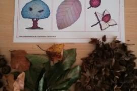 Waldprojekt der 1.b